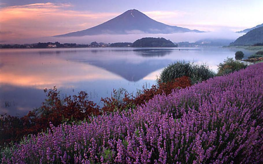 Experience nature in lavender fields along the Lake Kawaguchi silhouetted in the foot of Mount Fuji at the Lake Kawaguchi Herb Festival through July 10.