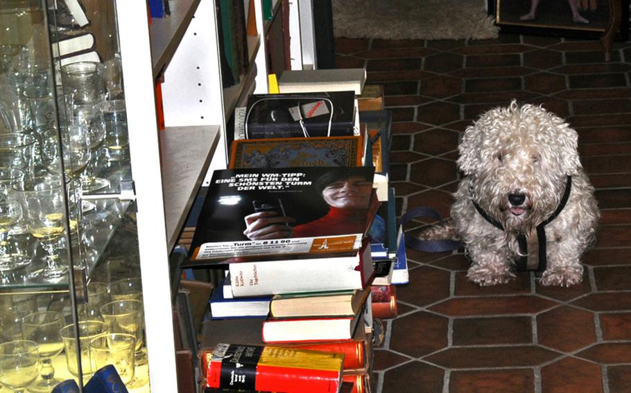Man's best friend guards the entrance to one of the many antique shops in Freiburg.