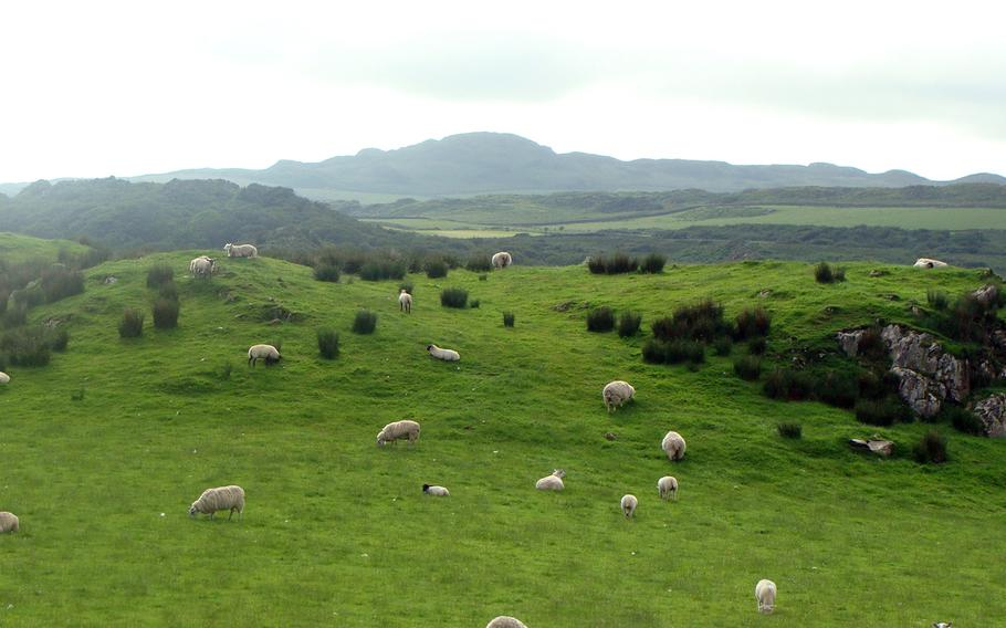 Scotland's Isle of Islay offers not only rugged terrain but also pastoral scenes such as this one. There are sheep galore on the island.