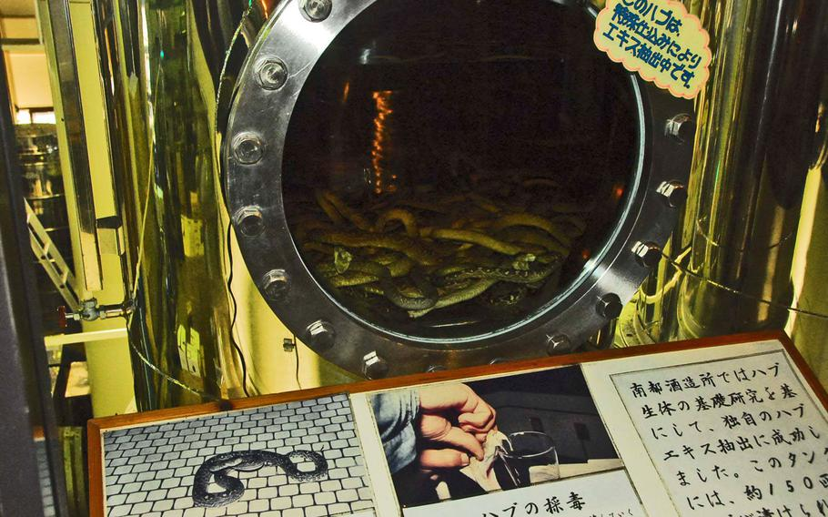 Visitors get a view of the snakes steeping in a vat of habu sake.