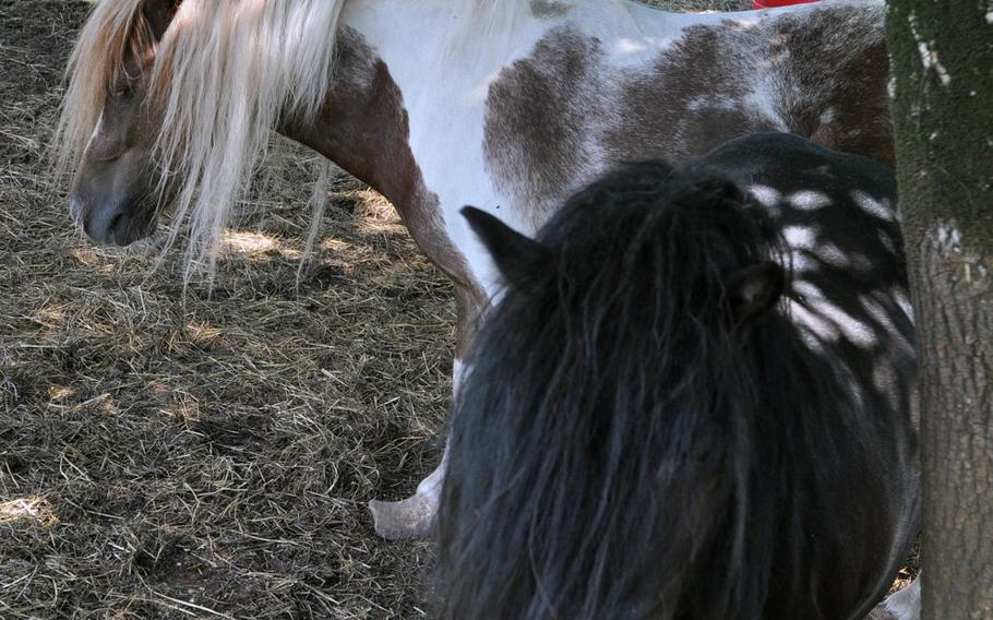 There's a small petting zoo with ponies and sheep at Al Bronzetto in Aviano, Italy. Don't worry about picking out the pig you want to eat, though. They're raised in Montreale.
