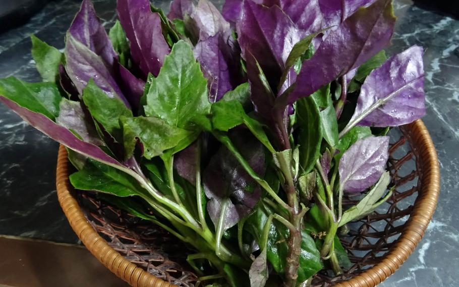 Okinawan spinach, or handama, is a popular local vegetable containing antioxidant vitamins and high amounts of polyphenol.