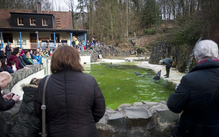 The seals at the Neunkirchen Zoo in Germany are fed daily, except Thursdays, at 10:30 a.m. and 3 p.m.