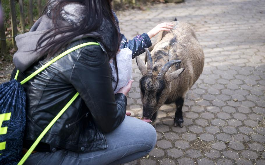 Visitors feed a goat at the Neunkirchen Zoo in Garmany.