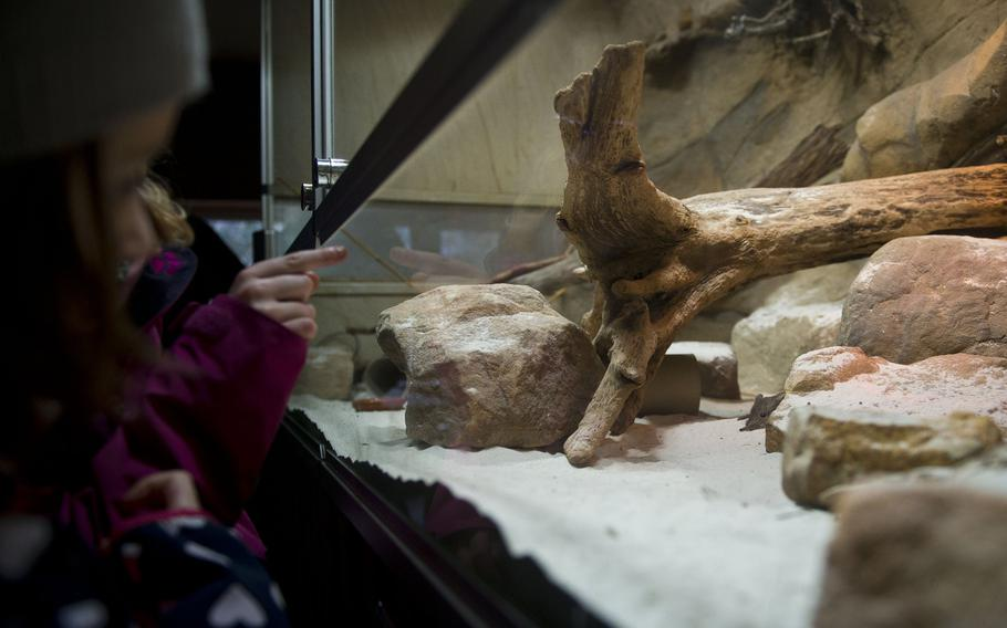 Children watch a shy short-eared elephant shrew at the Neunkirchen Zoo in Germany.