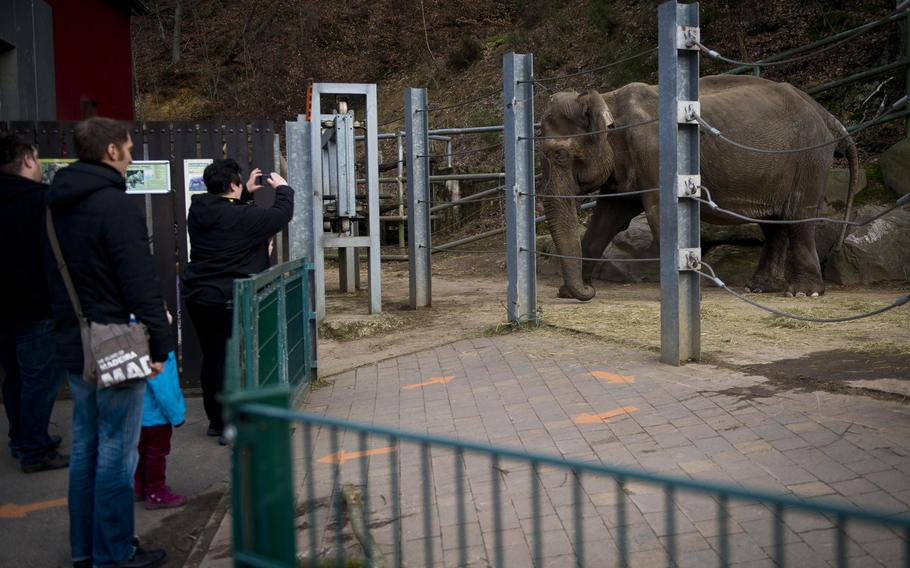 A visitor snaps a photo of one of the two elephants at the Neunkirchen Zoo in Germany.