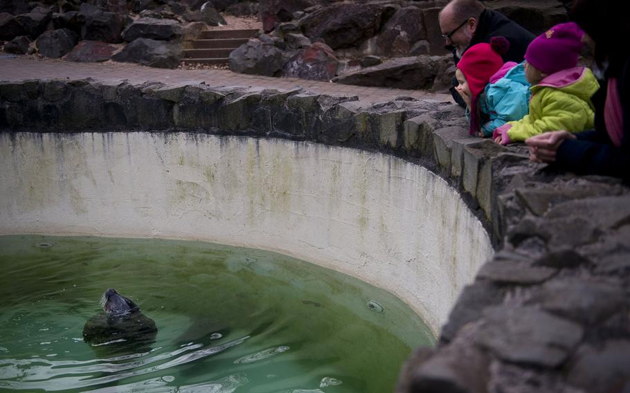 Neunkirchen Zoo visitors watch a seal float in its pond.