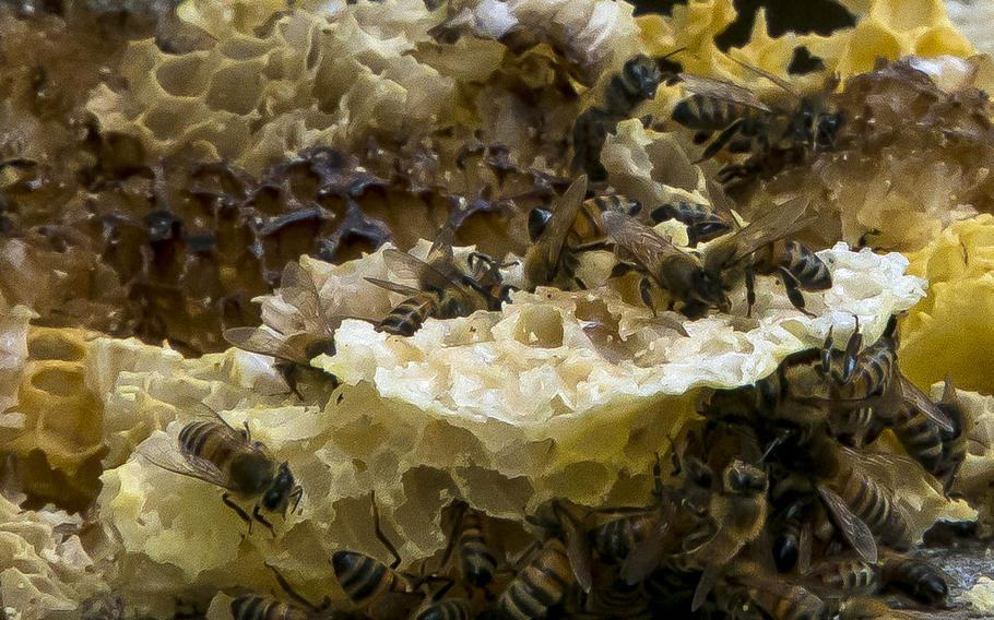 Kohamas Honey on Okinawa farms about 1,400 queen bees and countless worker bees throughout the island.