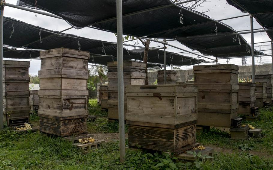 Beekeeping was introduced to Okinawa in the 1960s with the help of the U.S. military.