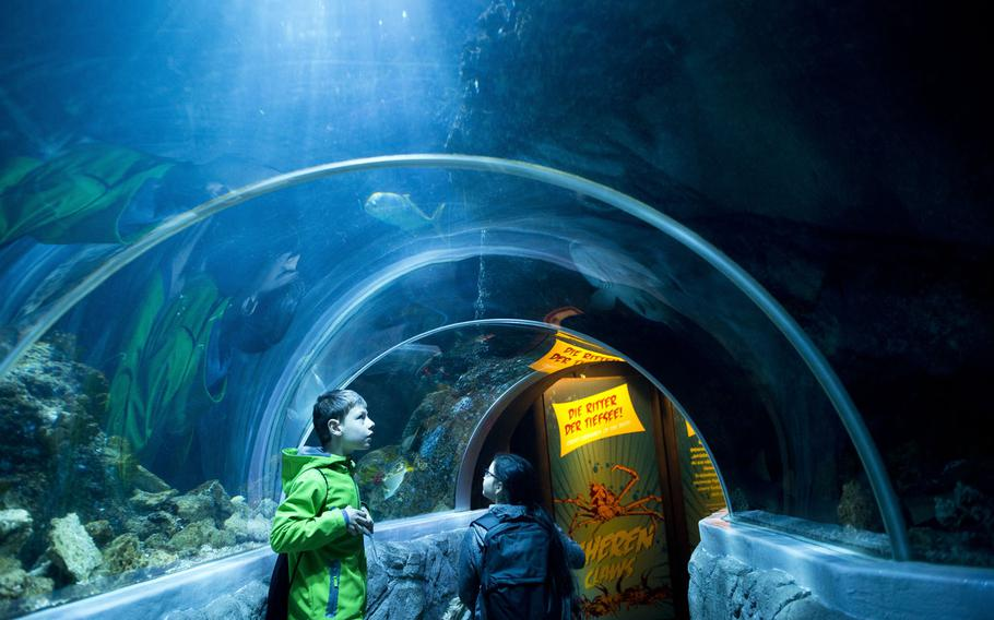 Visitors walk through the 26-foot long underwater tunnel at Sea Life in Speyer, Germany. The indoor aquarium houses more than 3,000 animals representing about 100 species.