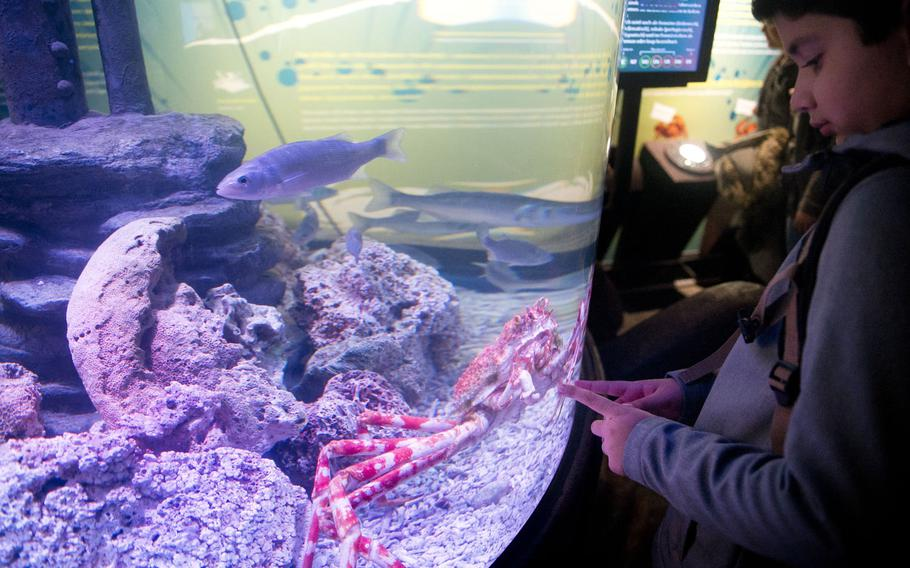 A visiting student at Sea Life in Speyer, Germany, spends a moment with a Japanese spider crab.