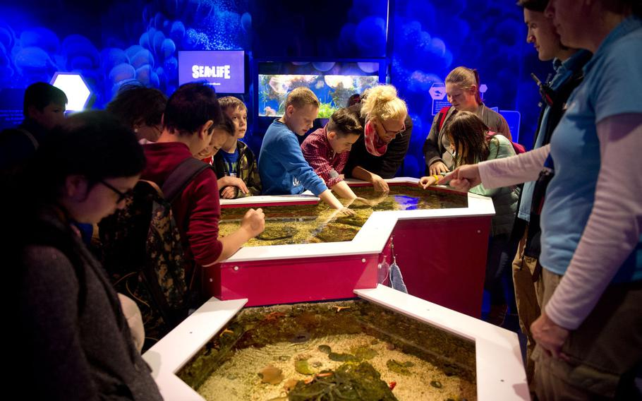 Visitors reach into a shallow pool and let shrimp crawl on their hands at Sea Life in Speyer, Germany.