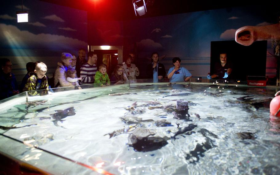 Visitors watch feeding time for rays and catsharks at Sea Life.