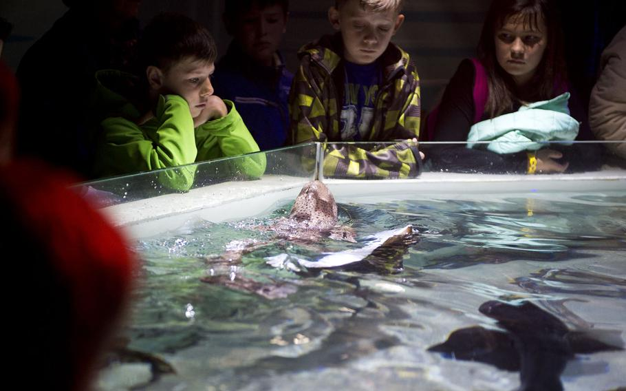Visitors watch a catshark and ray break the water surface during feeding time at Sea Life.