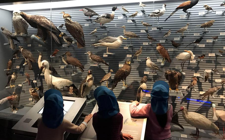 Children gaze at a display of birds at the National Museum of Nature and Science in Tokyo.