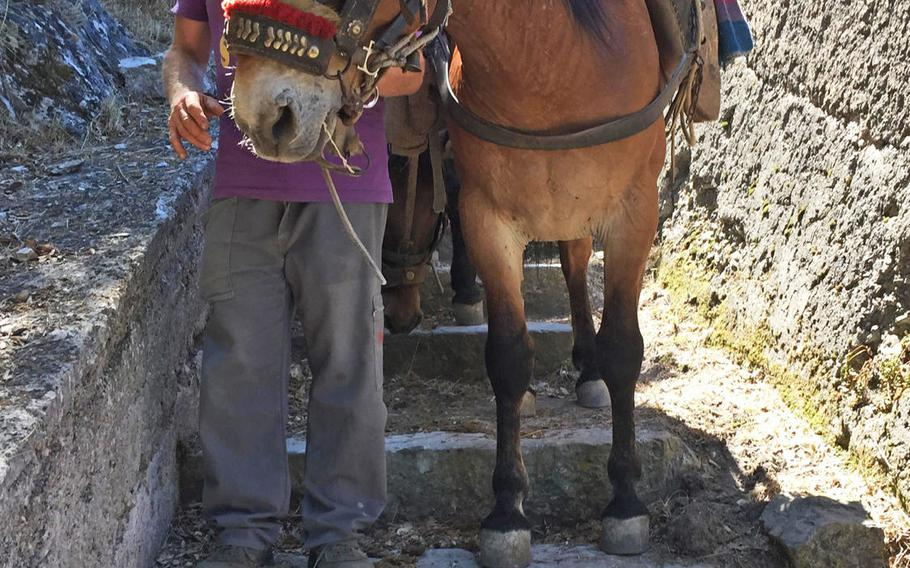 A Maiori resident leads his donkey down the long stairway that connects to the trail to Santuario dell'Avvocata. In this Italian region, donkeys are used to carry people or supplies to places where motorized vehciles can't go.