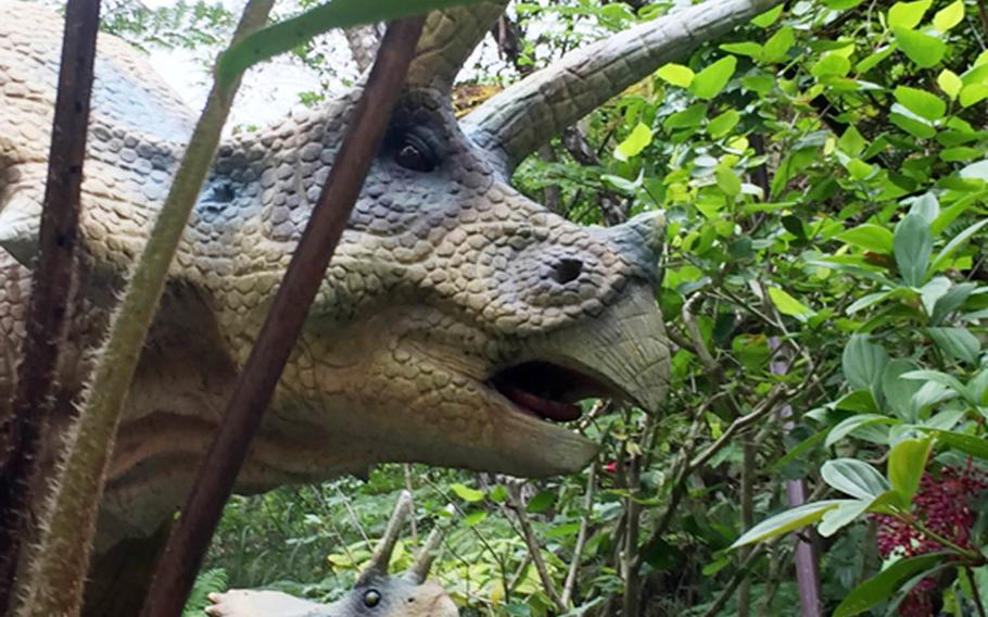 A Triceratops and its young laze among the jungle foliage at Dino Park in Okinawa, Japan.