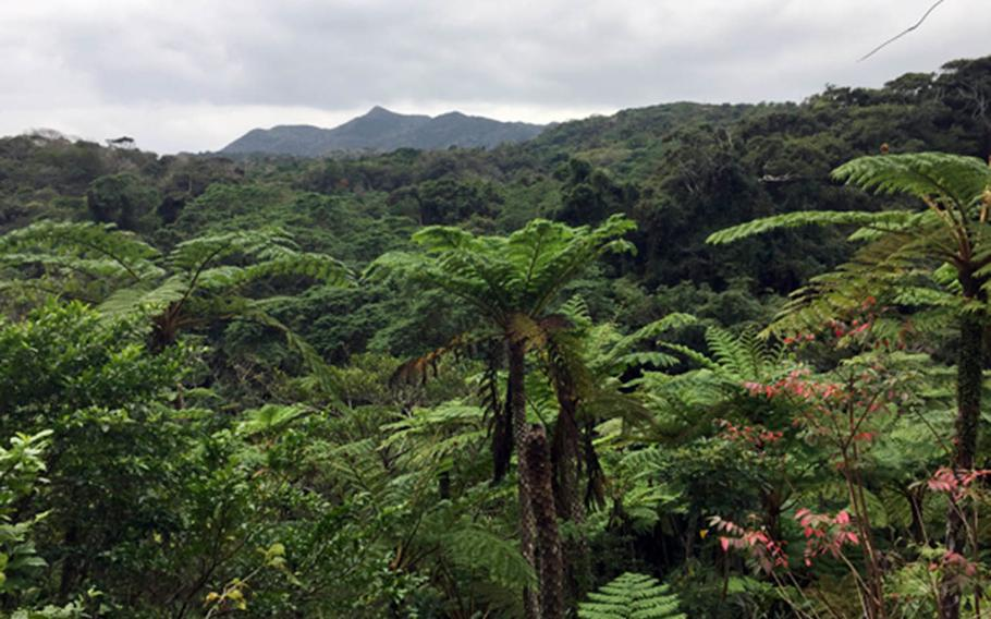 Yanbaru forest, home to Dino Park in Okinawa, Japan, transports visitors to a time when dinosaurs roamed the Earth.