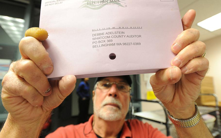 Election worker Richard Coit makes sure all ballots are removed from envelopes by looking through the hole in the middle of the envelopes at the Whatcom County Auditor's office on Election Day, Tuesday, November 6, 2012, in Bellingham, Washington. More then half of the registered voters in Whatcom County had already turned in their ballots before Election Day.