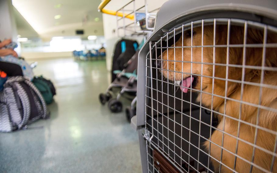 A customer's dog sits in a kennel in the designated pet area at the Yokota Air Base, Japan, Passenger Terminal, Nov. 29, 2018.