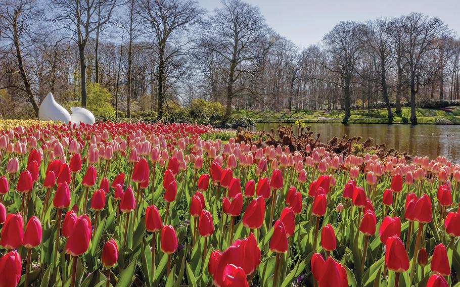 The tulips are in full bloom, but Keukenhof is empty of people. Because of the coronavirus pandemic, the spring flower garden on the outskirts of Lisse, Netherlands, will not be open to the public in 2020.