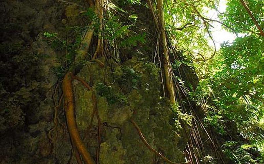 Vegetation grows along a stone cliff at Sefa Utaki, Okinawa's most holy site.