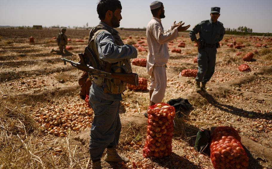 Afghan police speak with farmers in the Zhari district of southern Afghanistan's Kandahar province as they harvest onions on Oct. 21, 2013.