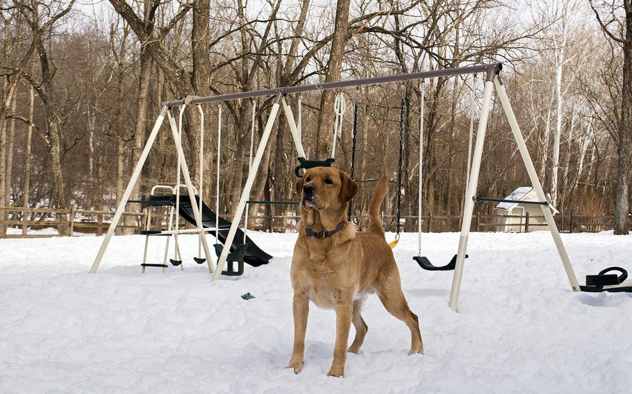 Ron, a therapy dog, waits for his owner, Ret. Capt. Bob Koffman, to throw a toy outside Warrior Canine Connection in Maryland in February 2015.