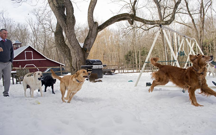 Ret. Capt. Bob Koffman throws a toy to dogs outside the Warrior Canine Connection in Maryland in February 2015. The dogs, from left to right, are Olive, Derek, Ron and Huff. Huff is Ron's father.