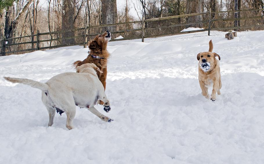 Warrior Canine Connection dogs play in the snow outside the nonprofit in February 2015. The dogs, left to right, are Olive, Huff and Ron. Huff is Ron's father.