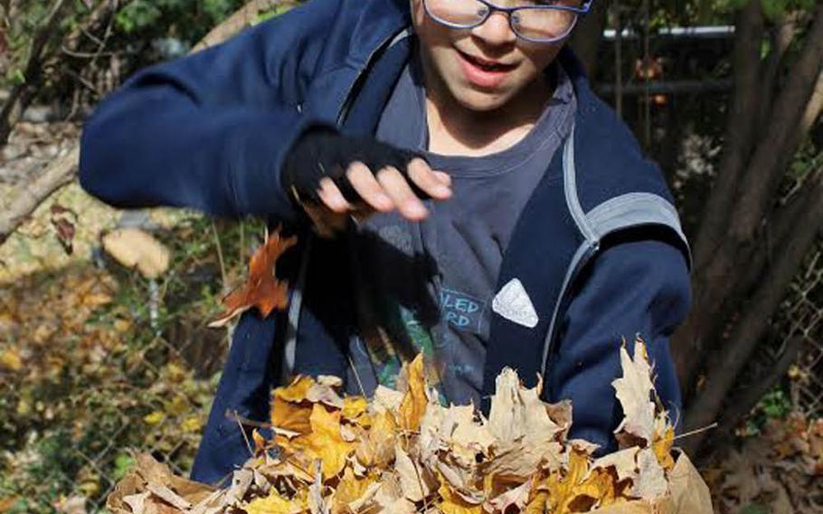 Yuval Gottstein prepares to crush the leaves.