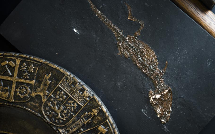 A fossilized animal that was dug up during mining operations.