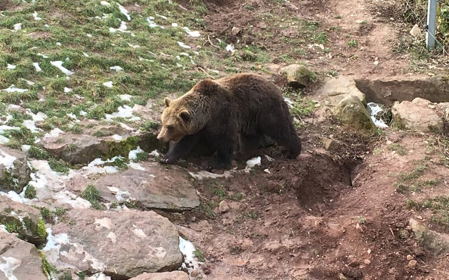 Bears are the biggest of the animals at the Wildlife Park in Tripsdrill, Germany, which features about 40 types of animals in a natural setting.