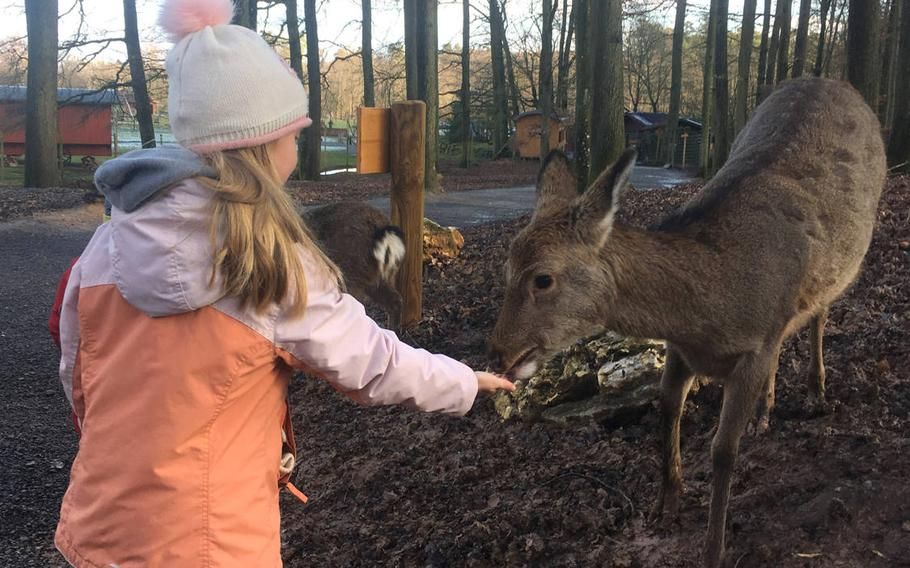 Deer roam freely at the Wildlife Park in Tripsdrill, where the animals can be fed by hand and petted.