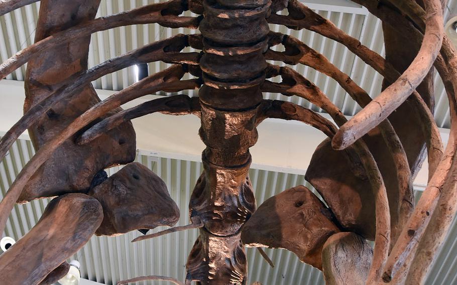 Children can gaze up at a cavernous dino rib cage inside Gondwana - Das Praehistorium, an interactive dinosaur museum near Kaiserslautern, Germany.