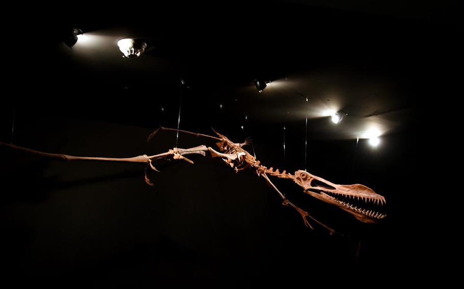 The bones of a pterosaur appear to take flight at Gondwana - Dae Praehistorium, an interactive museum with a prehistoric theme near Kaiserslautern, Germany.