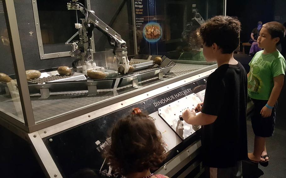 A visitor at Expedition: Dinosaur uses a robotic arm to move faux prehistoric eggs at the Dinosaur Hatchery display.