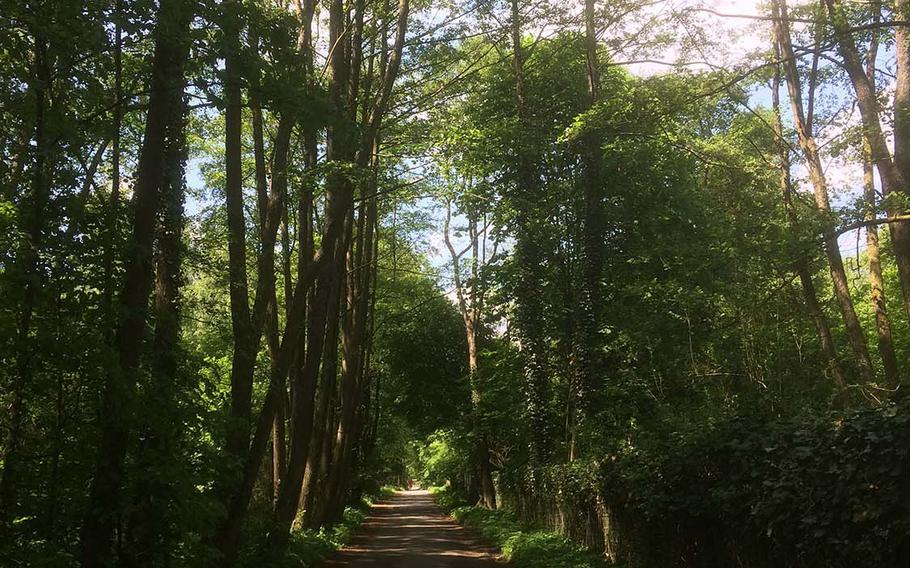 A trail winds through the wooded Taunus mountains near Oberursel, Germany. Oberursel's Hohemark district is home to the Taunus tourist information center, which has information on the variety of hiking and biking trails in the area.