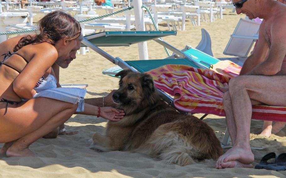 Bau Bau Beach in Jesolo, Italy, lets dogs and their owners enjoy sun, sand and sea together. It's also great place to meet other dogs.