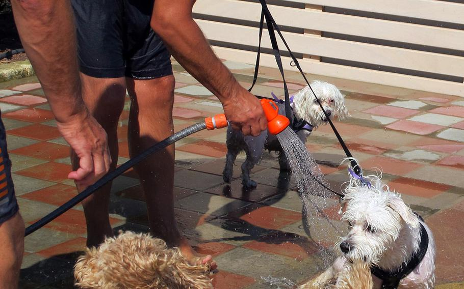 After a day at Bau Bau Beach in Jesolo, Italy, dogs take a shower.