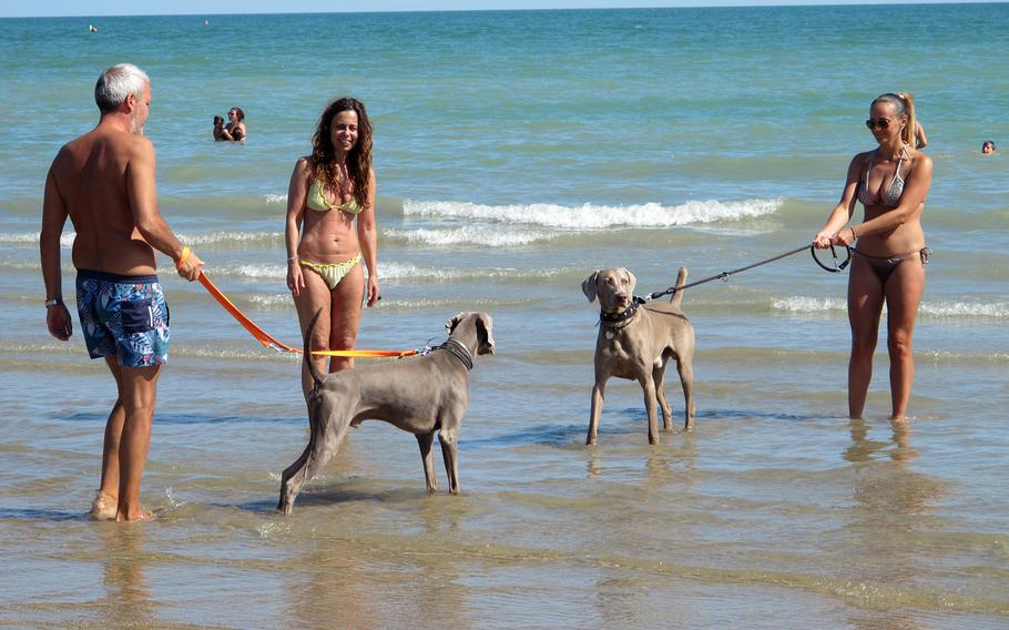 Bau Bau Beach patrons take their Weimaraners for a stroll in the sea. The beach in Jesolo, Italy, requires that dogs be leashed.