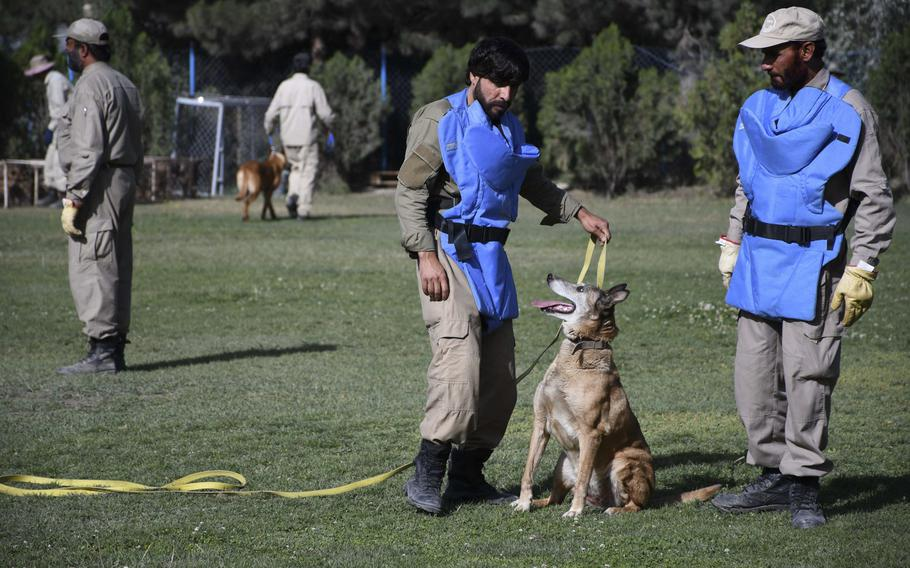 Mohammad Sharif, left, and Taj Mohammad inspect one of the 140 mine-detection dogs at the Mine Detection Center in Kabul.