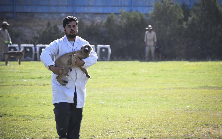 Mohammad Zarif retrieves Mike, a puppy that had been let loose to run around a field at the Mine Detection Center in Kabul.