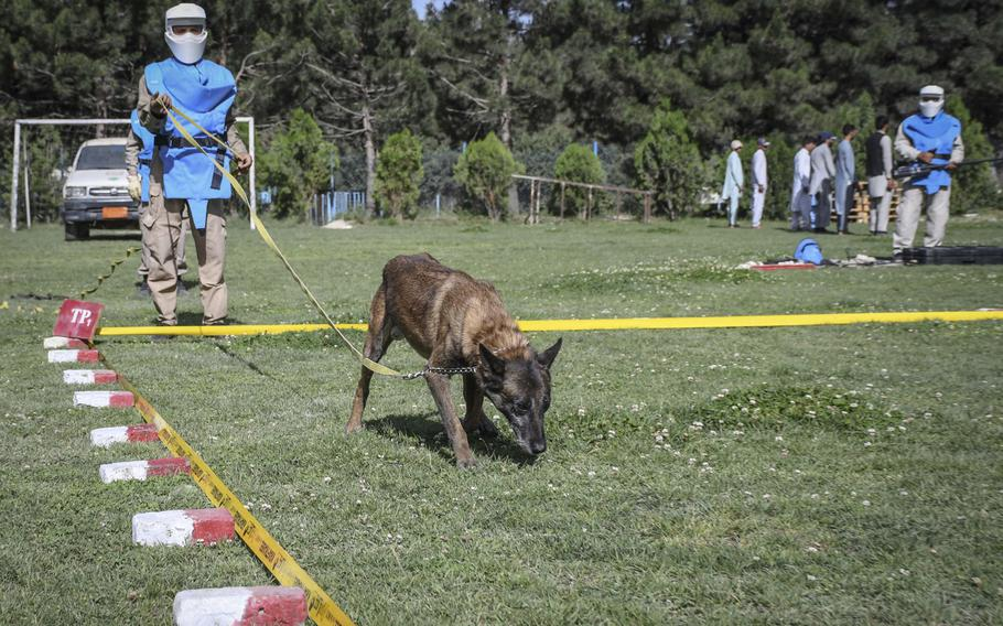 Virkerikki, a mine-detection dog, sniffs out mines as part of training at the Mine Detection Center in Kabul, a program that began as a U.S.-funded pilot program in 1989 and has cleared more than 170 million square meters of minefields.