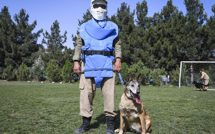 Dog handler Mohammed Sharif and his mine-detection dog Olga, a 7-year-old Malinois, practice for obedience training at the Mine Detection Center in Kabul.