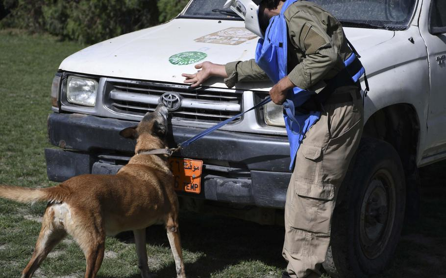 Olga, a 7-year-old Malinois and a veteran mine-detection dog, searches a car for explosives as part of training at the Mine Detection Center in Kabul.