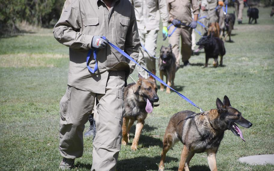 Mine-detection dogs march around a training field at the Mine Detection Center in Kabul, Afghanistan.