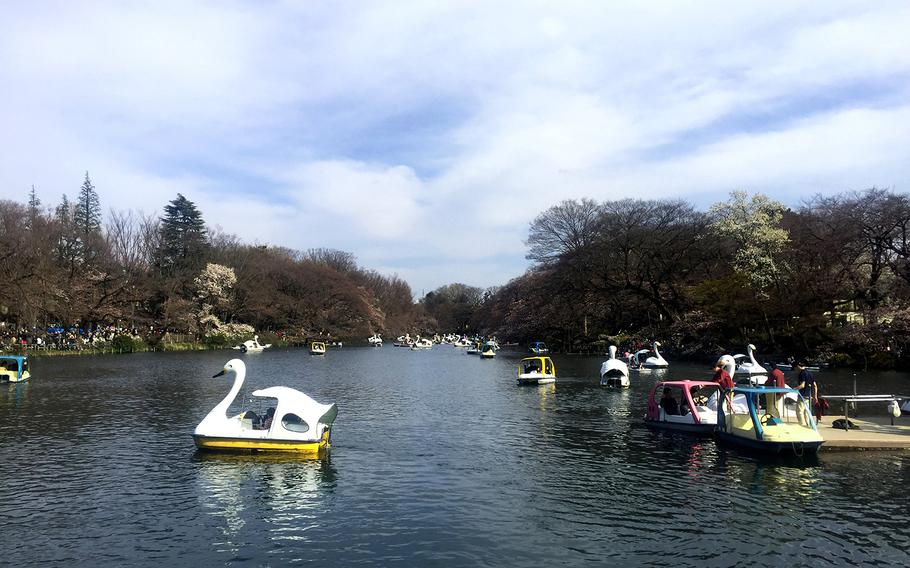 For more than 100 years, Tokyo's Inokashira Koen has served as a gathering place for families and young people, who flock to see its scenic landscape complete with a large natural pond.