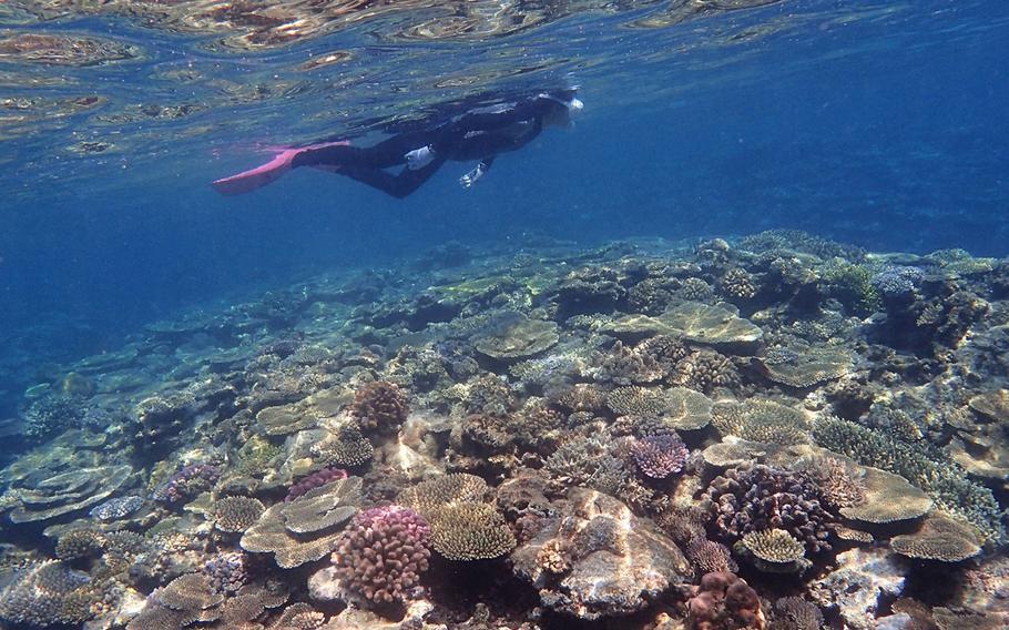 Izena Marine Service Guin is the only shop providing snorkeling tours to tourists on Izena Island.
