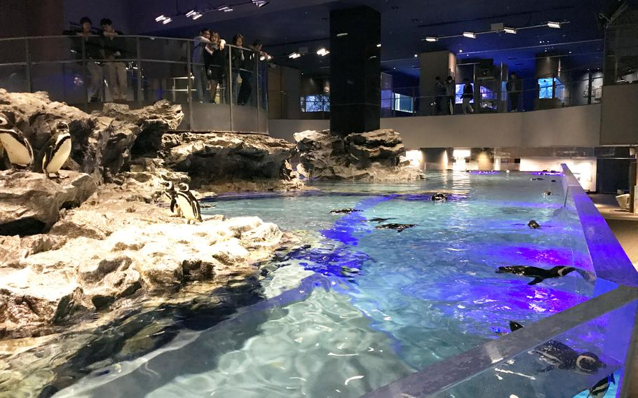 Dozens of penguins inhabit the tank at Tokyo Skytree's Sumida Aquarium, which allows visitors to get an up-close look of the animals as they swim by.